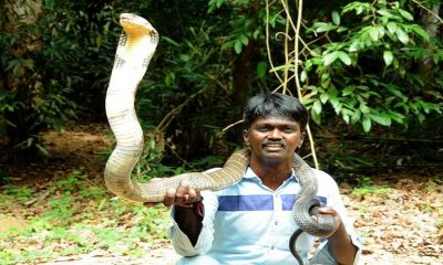 vava-suresh-retired-snake hunting