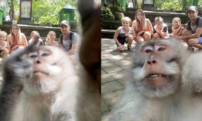 Monkey-middle-finger-selfie-bali-1