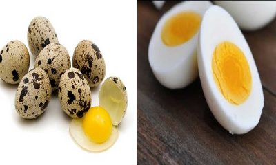 Are you eating quail eggs? Then look at these things