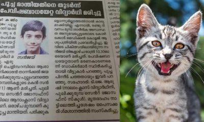 sanjay-cat